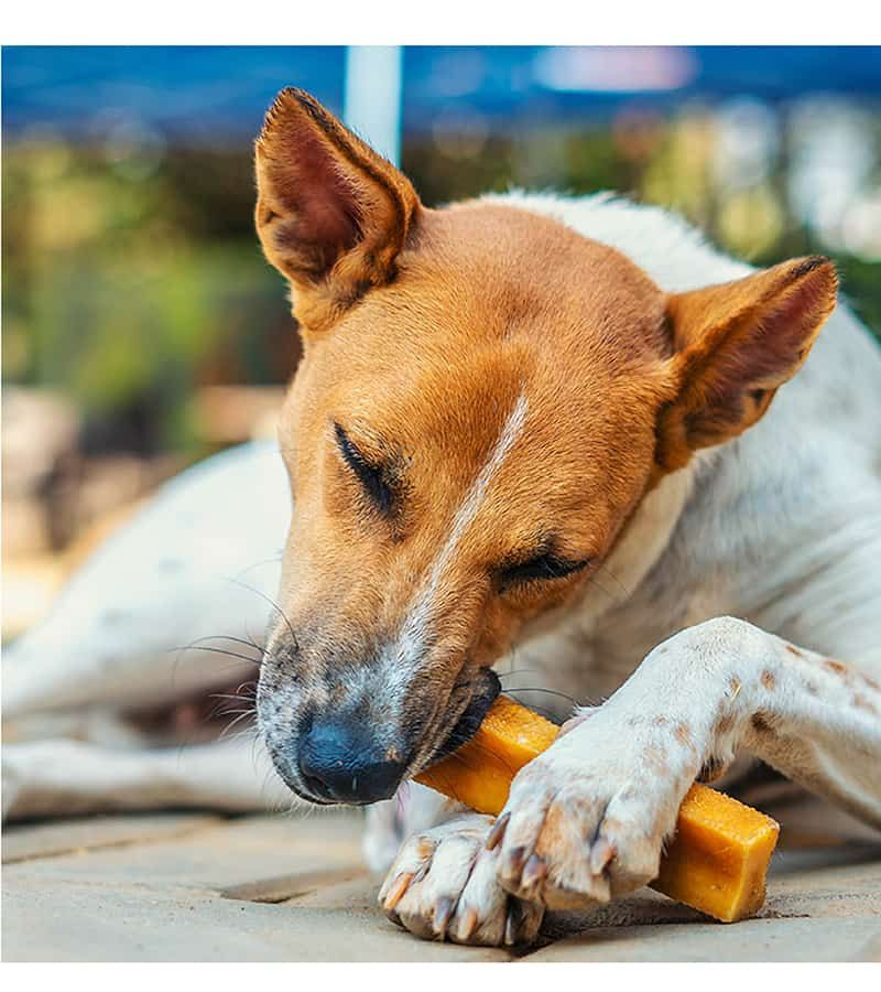 long lasting dog chews for dogs