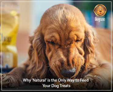 Why 'Natural' is the Only Way to Feed Your Dog Treats