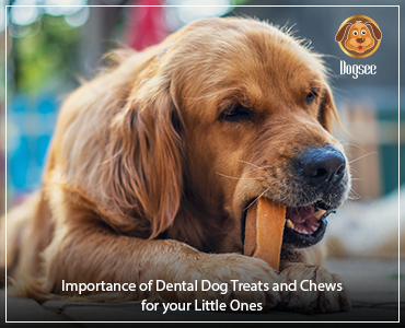 Importance of Dental Dog Treats and Chews for your Little Ones
