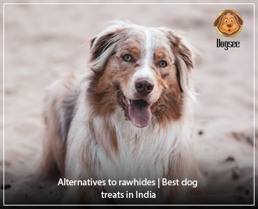 Alternatives to rawhides | Best dog treats in India