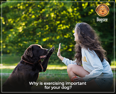 Why is Exercising Important for Your Dog?