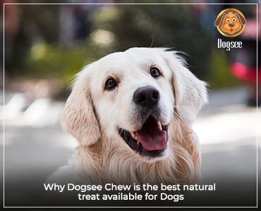 Why Dogsee Chew Is the Best Natural Treat Available for Dogs?