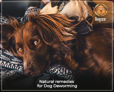 Natural Remedies for Deworming of Dogs