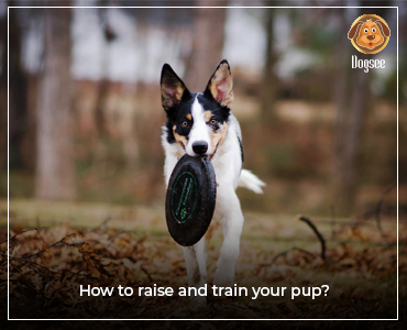 How to raise and train your pup?