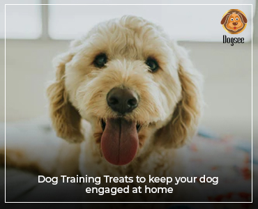 Dog Training Treats to keep your dog engaged at home