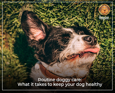 Routine Doggy Care: What it Takes to Keep Your Dog Healthy