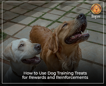 How to Use Dog Training Treats for Rewards and Reinforcements