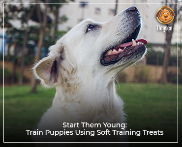 Start Them Young: Train Puppies Using Soft Training Treats