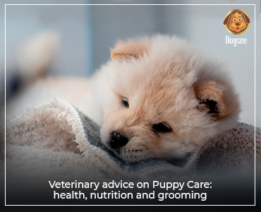 Veterinary Advice on Puppy Care: Health, Nutrition and Grooming