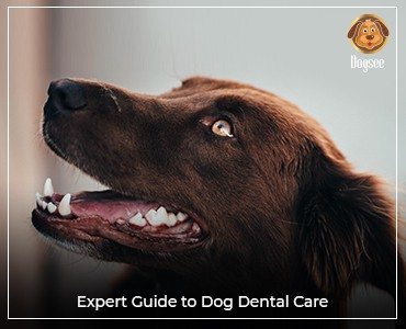 Expert Guide To Dog Dental Care