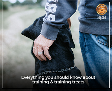 Everything You Should Know About Dog Training & Training Treats