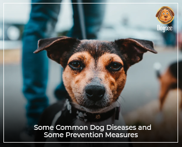 Some Common Dog Diseases and Some Prevention Measures
