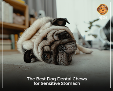 The best dog dental chews for sensitive stomachs