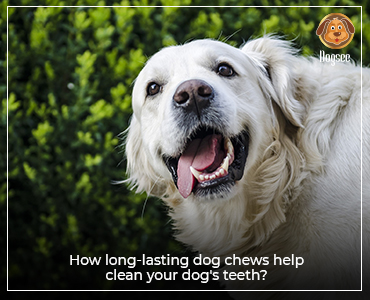How long-lasting dog chews help clean your dog's teeth