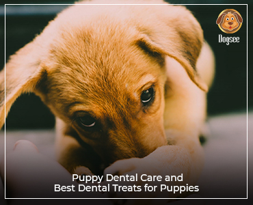 Puppy Dental Care and Best Dental Treats for Puppies