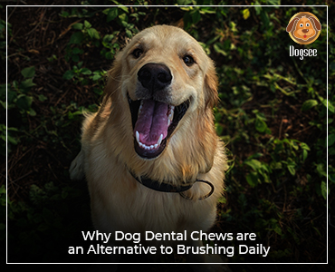 Why dog dental chews are an alternative to brushing daily