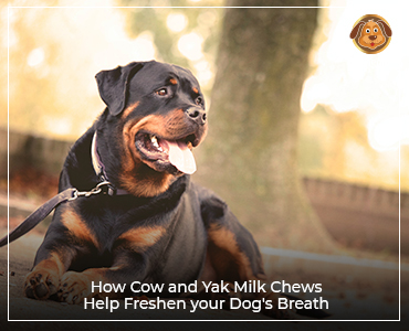 How cow and yak milk chews help freshen your dog's breath