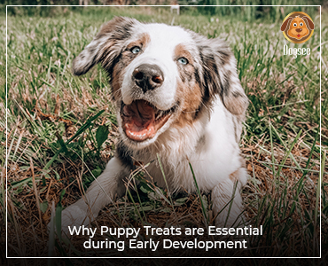 Why Puppy Treats are Essential during Early Development