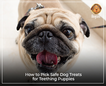 How to Pick Safe Dog Treats for Teething Puppies