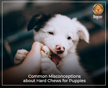 Common Misconceptions about Hard Chews for Puppies