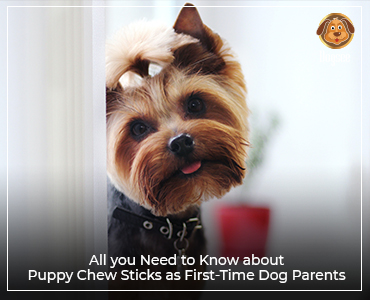 All you need to know about puppy chew sticks as first-time dog parents
