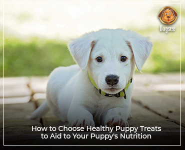 How to Choose Healthy Puppy Treats to Aid to Your Puppy's Nutrition
